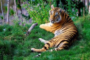 INDIA PALACIOS Y TIGRES